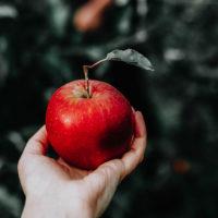 Hello, Original Sin! Adam and Eve Meet Vulnerability and Accountability