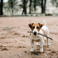The Way of Knowing: How Your Dog Can Teach Your Skepticism
